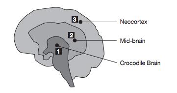 Croc-Brain